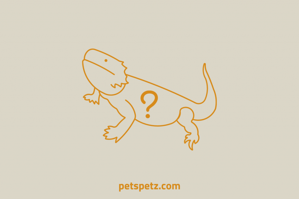 What Is A Silkback Bearded Dragon