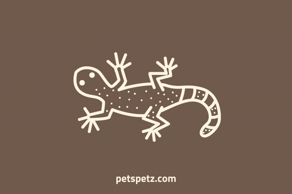 leopard gecko with thin tail
