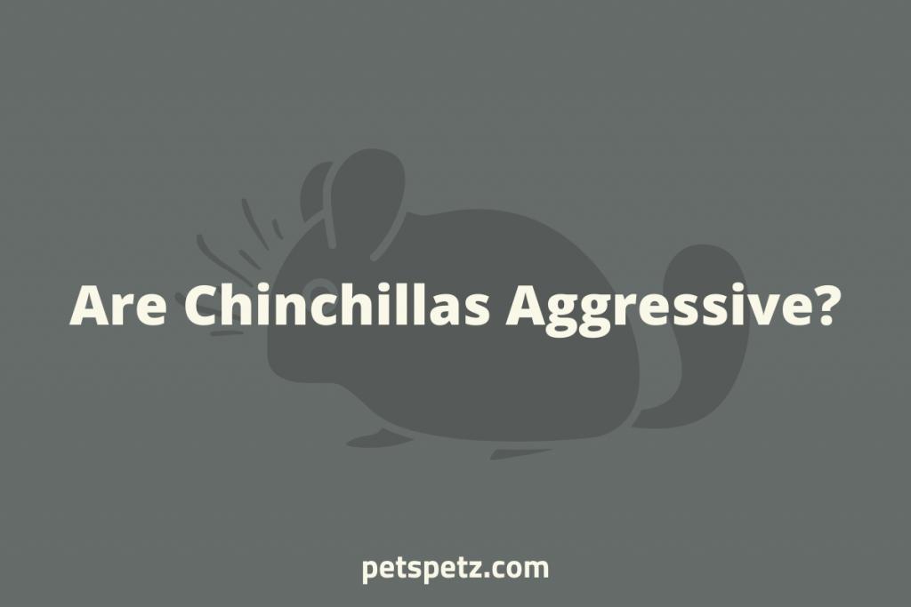 Are Chinchillas Aggressive