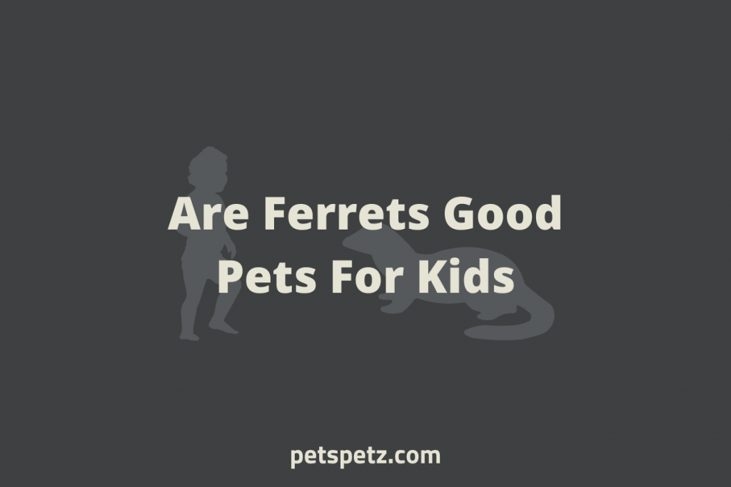 Are Ferrets Good Pets For Kids