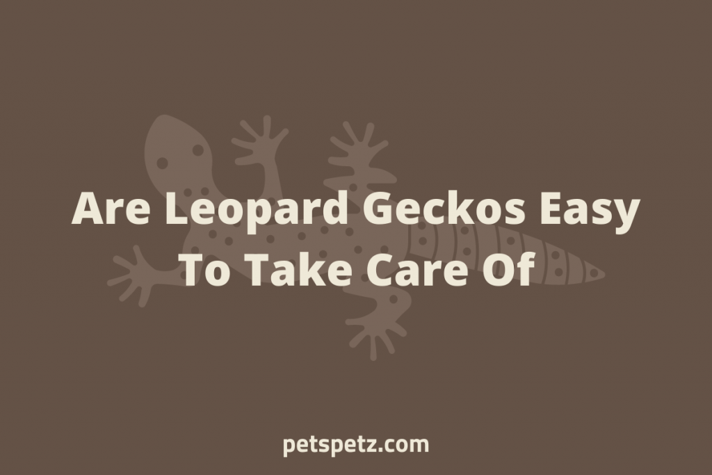 Are Leopard Geckos Easy to Take Care Of