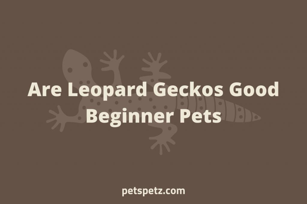 Are Leopard Geckos Good Beginner Pets