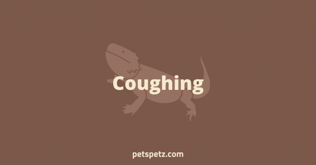 Bearded Dragon Coughing