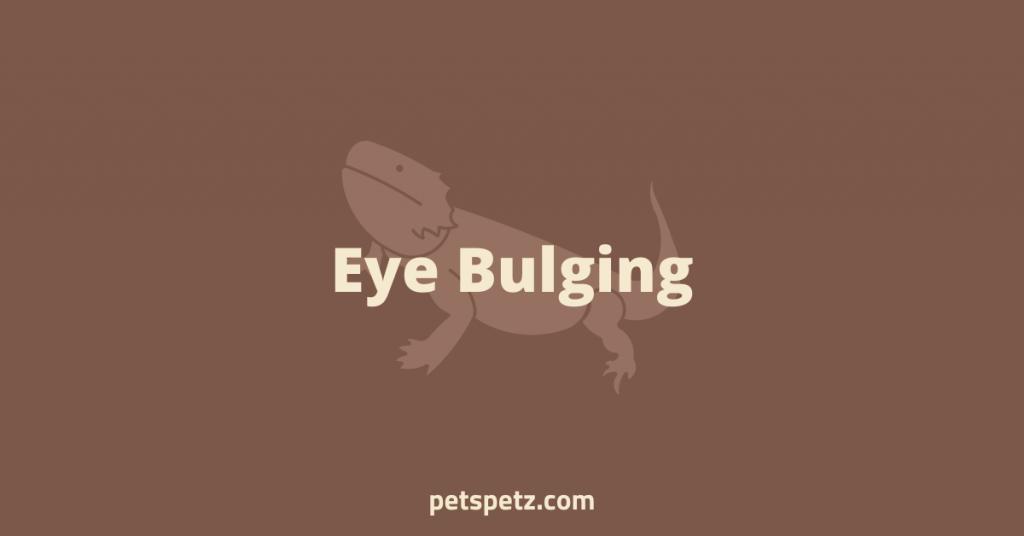 Bearded Dragon Eye Bulging
