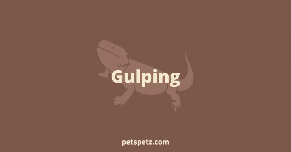 Bearded Dragon Gulping