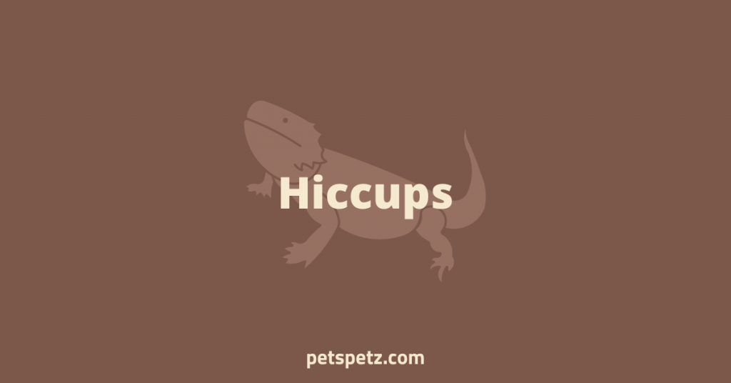 Bearded Dragon Hiccups