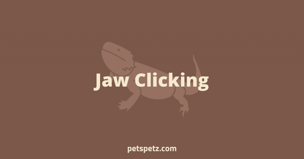 Bearded Dragon Jaw Clicking