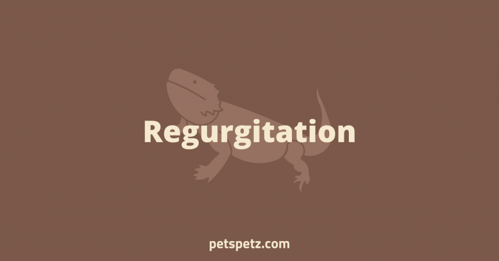 Bearded Dragon Regurgitation