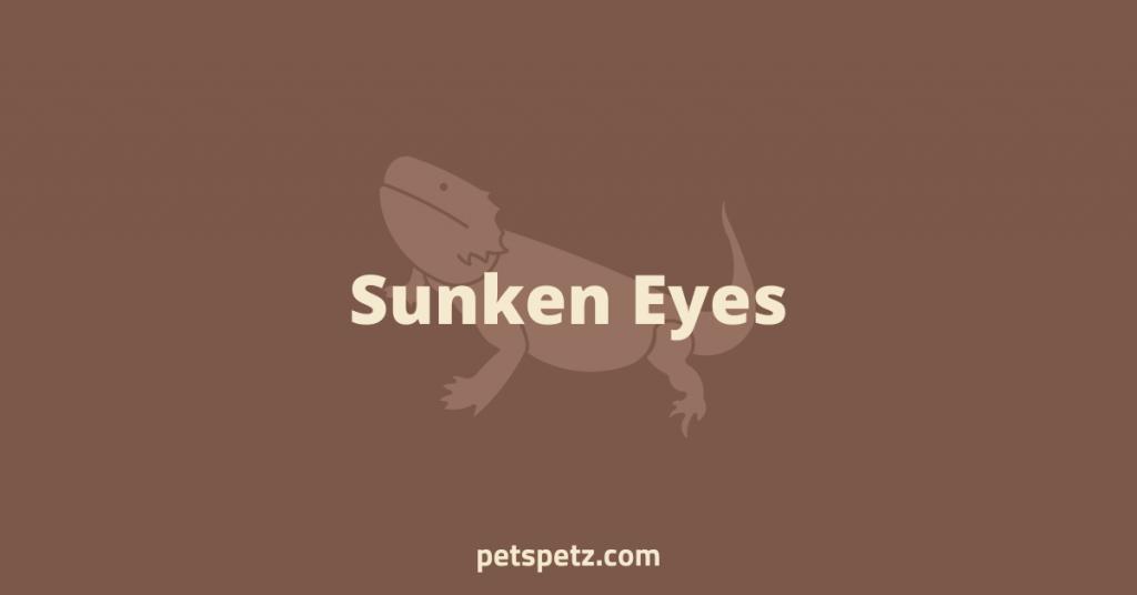 Bearded Dragon Sunken Eyes