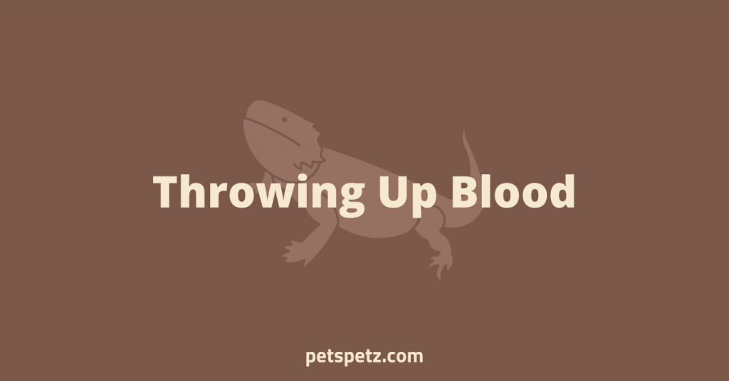 Bearded Dragon Throwing Up Blood