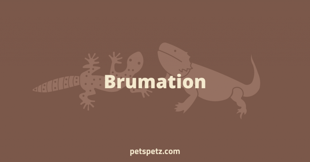 Brumation difference