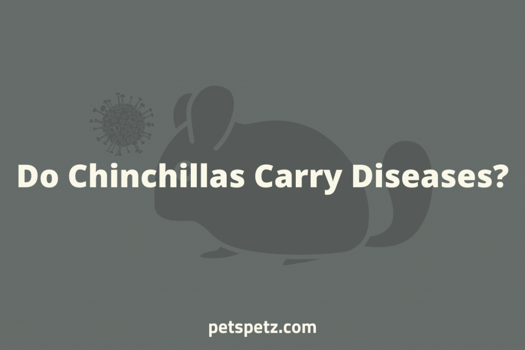 Do Chinchillas Carry Diseases