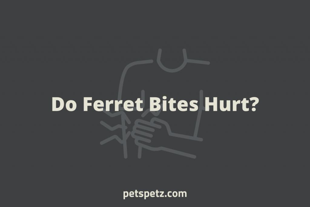 Do Ferret Bites Hurt