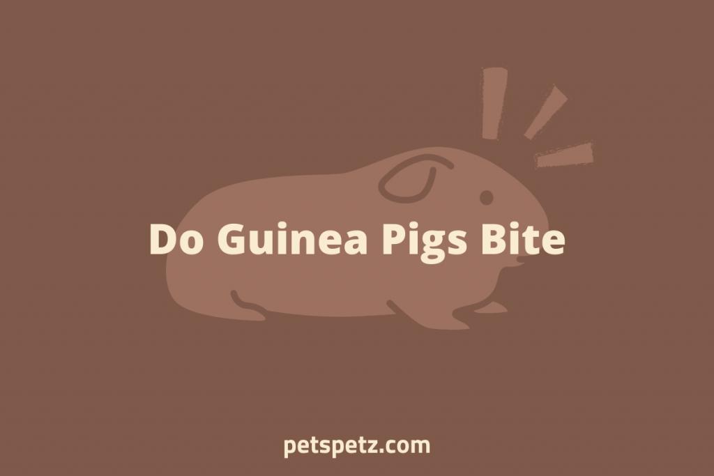 Do Guinea Pigs Bite