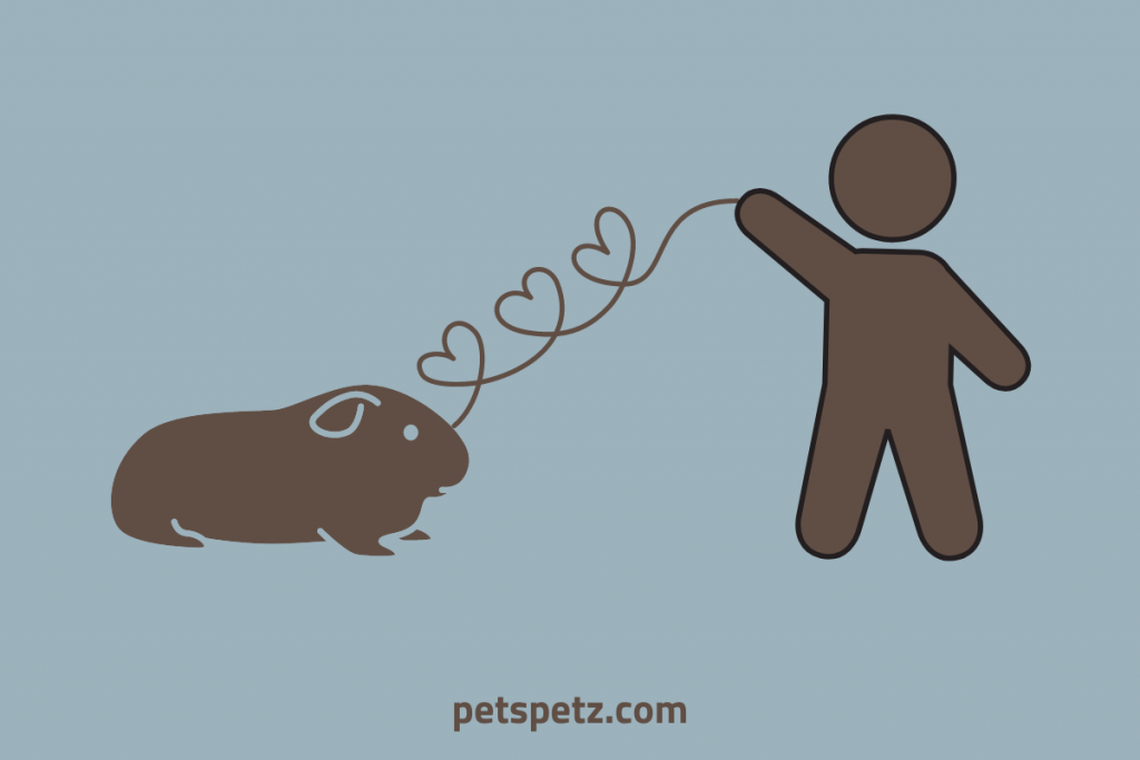 Do Guinea Pigs Get Attached to Their Owners