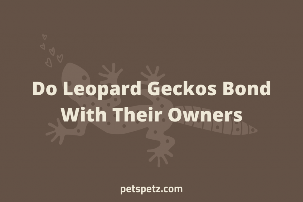Do Leopard Geckos Bond With Their Owners