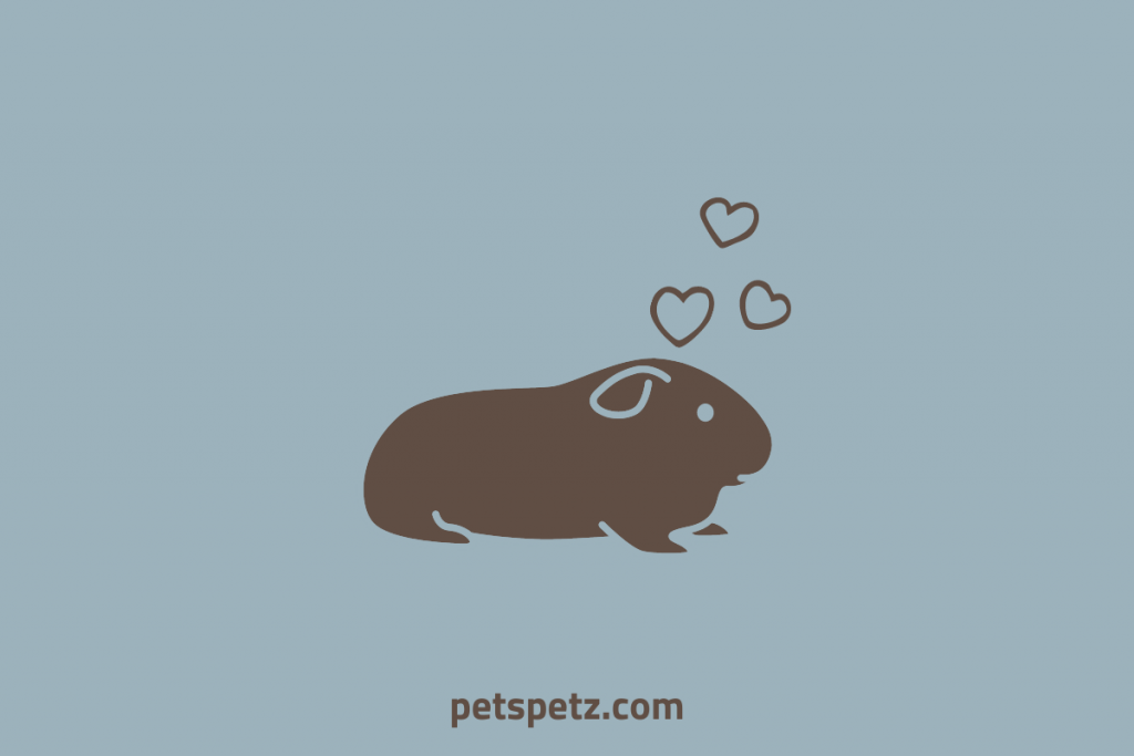 How Do You Know When Your Guinea Pig Trusts You