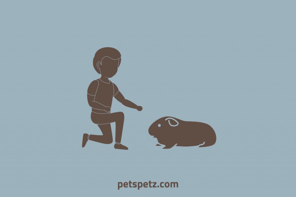 How To Bond With A Guinea Pig