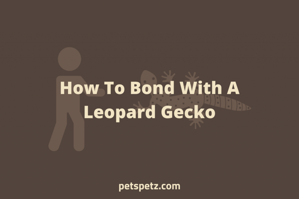 How To Bond With A Leopard Gecko