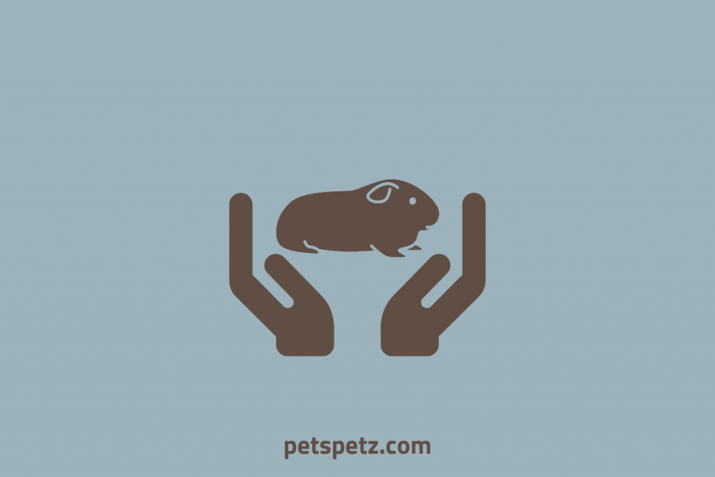 How To Pick Up A Guinea Pig
