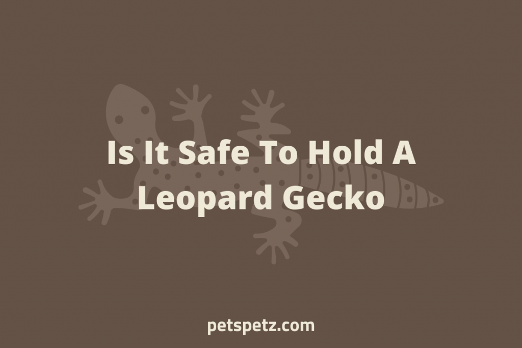 Is it safe to hold a leopard gecko