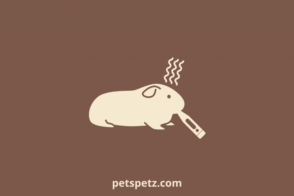 Signs That There Is A Problem With Guinea Pig Poop