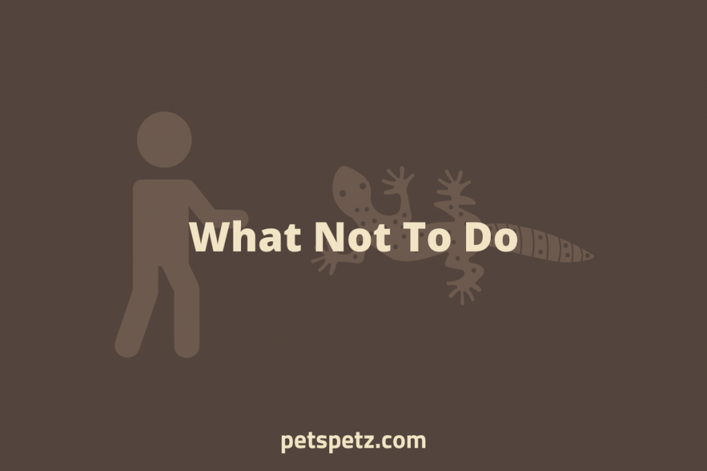 What Not To Do When Bonding With A Leopard Gecko