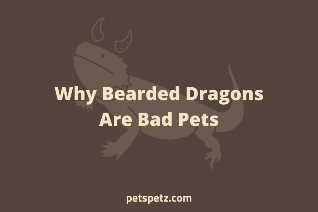 Why Bearded Dragons Are Bad Pets 1