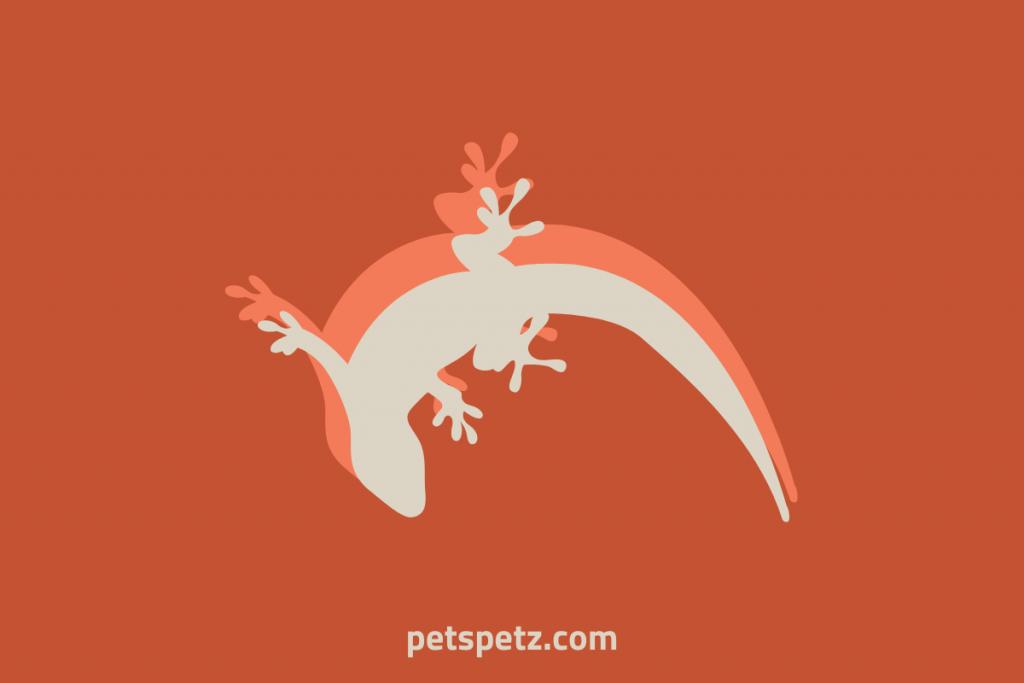 Why Do Gargoyle Geckos Fire Up