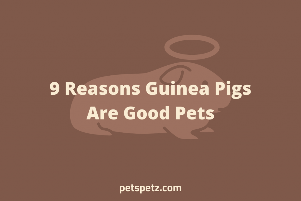 Why Guinea Pigs Are Good Pets