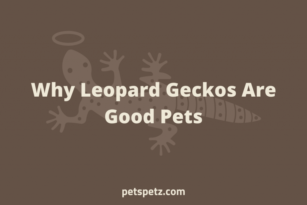Why Leopard Geckos Are Good Pets