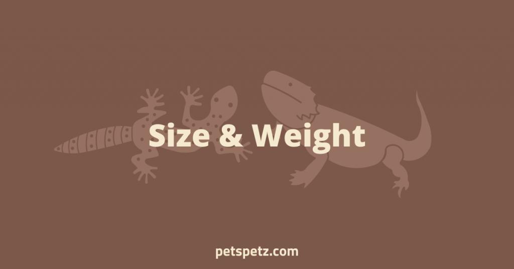 are leopard geckos better than bearded dragons