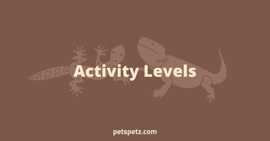 bearded dragons vs leopard geckos