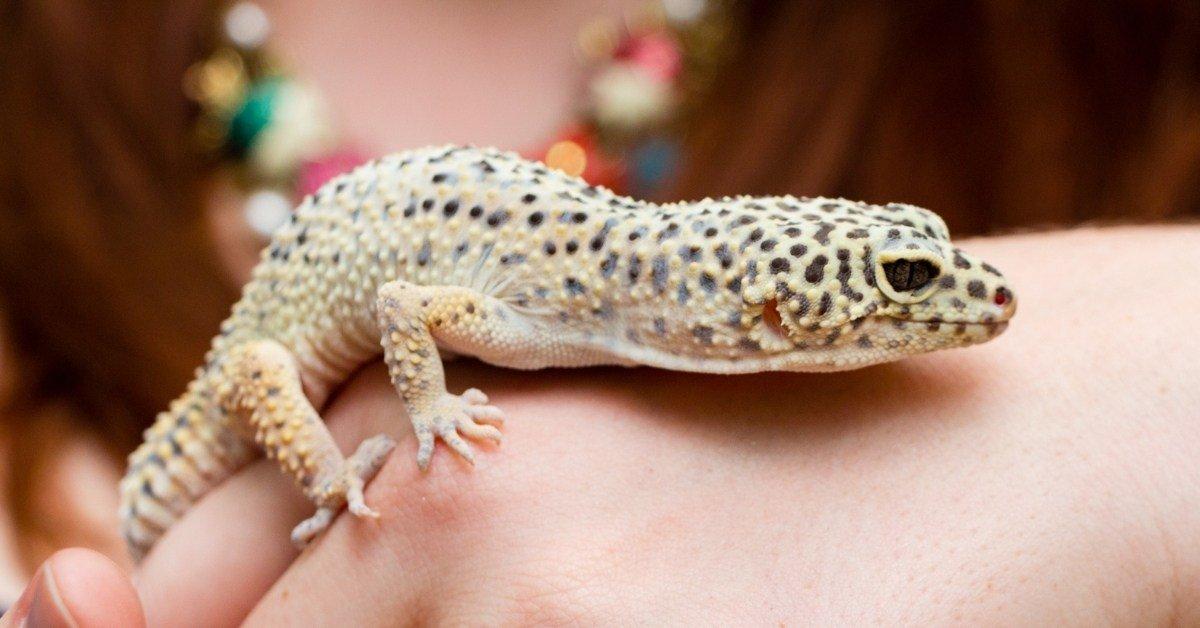 bond with a leopard gecko