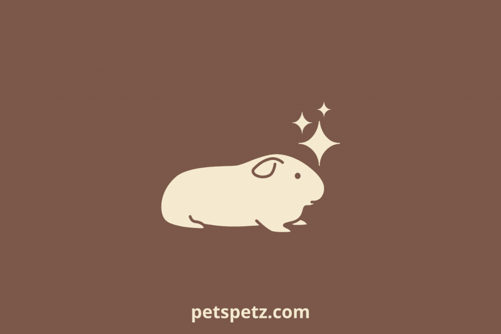 guinea pig not eating feces