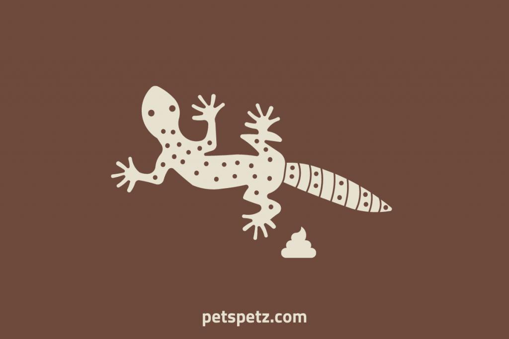 how often should a leopard gecko poop