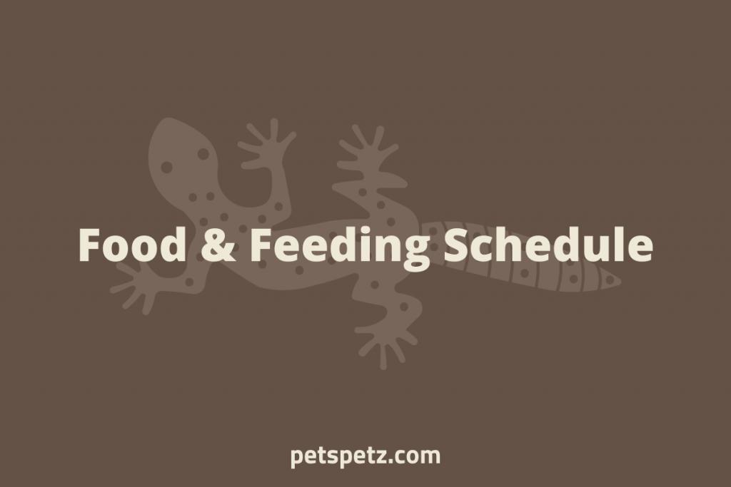 leopard gecko Food & Feeding Schedule