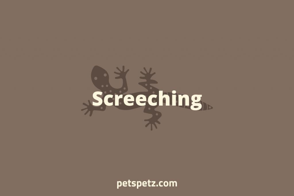 leopard gecko screech