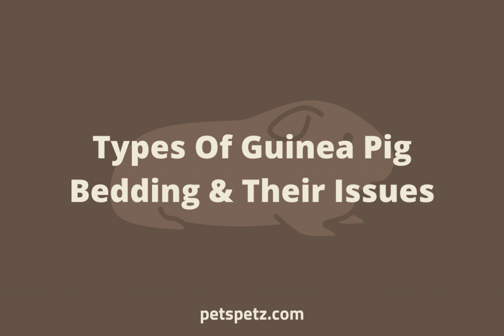 types of guinea pig bedding