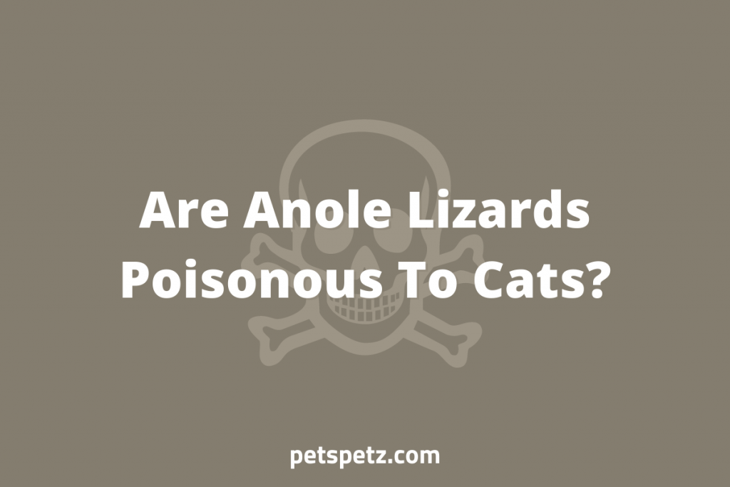 Are Anole Lizards Poisonous To Cats