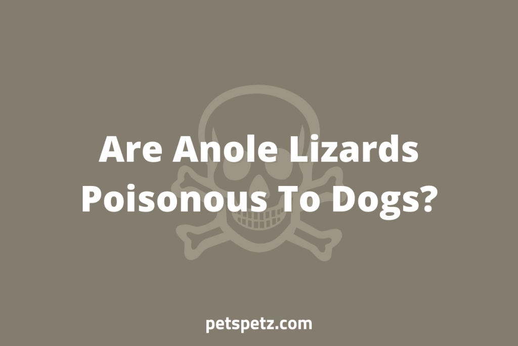 Are Anole Lizards Poisonous To Dogs