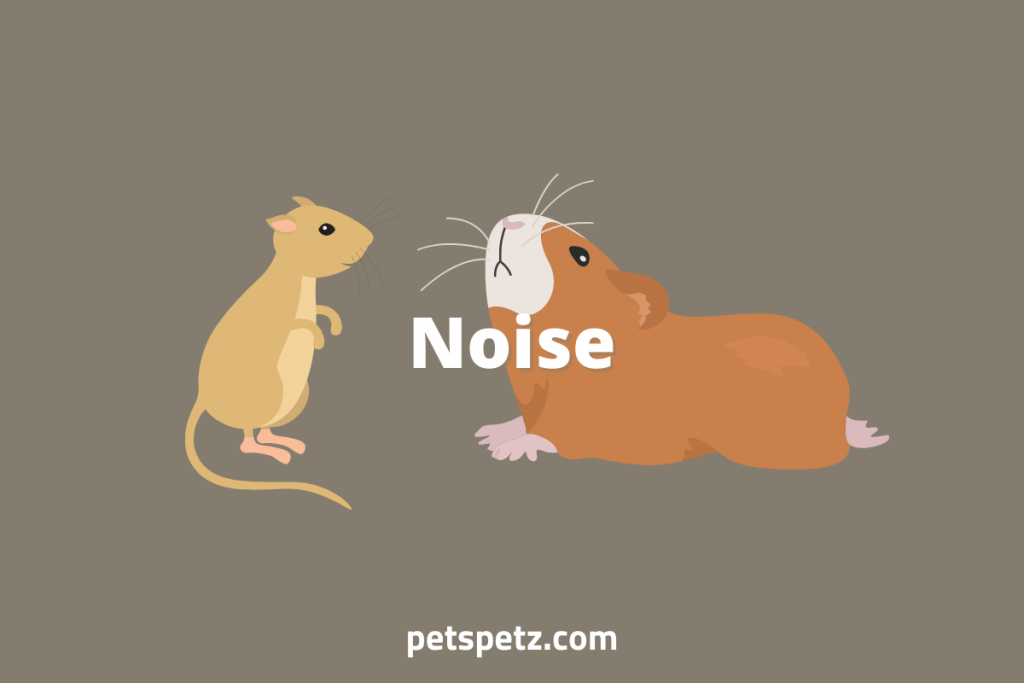 Are guinea pigs or hamsters easier to take care of_