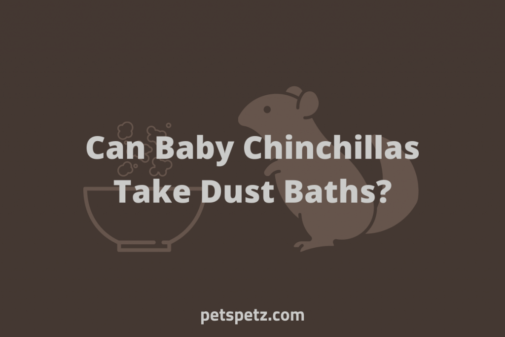 Can Baby Chinchillas Take Dust Baths