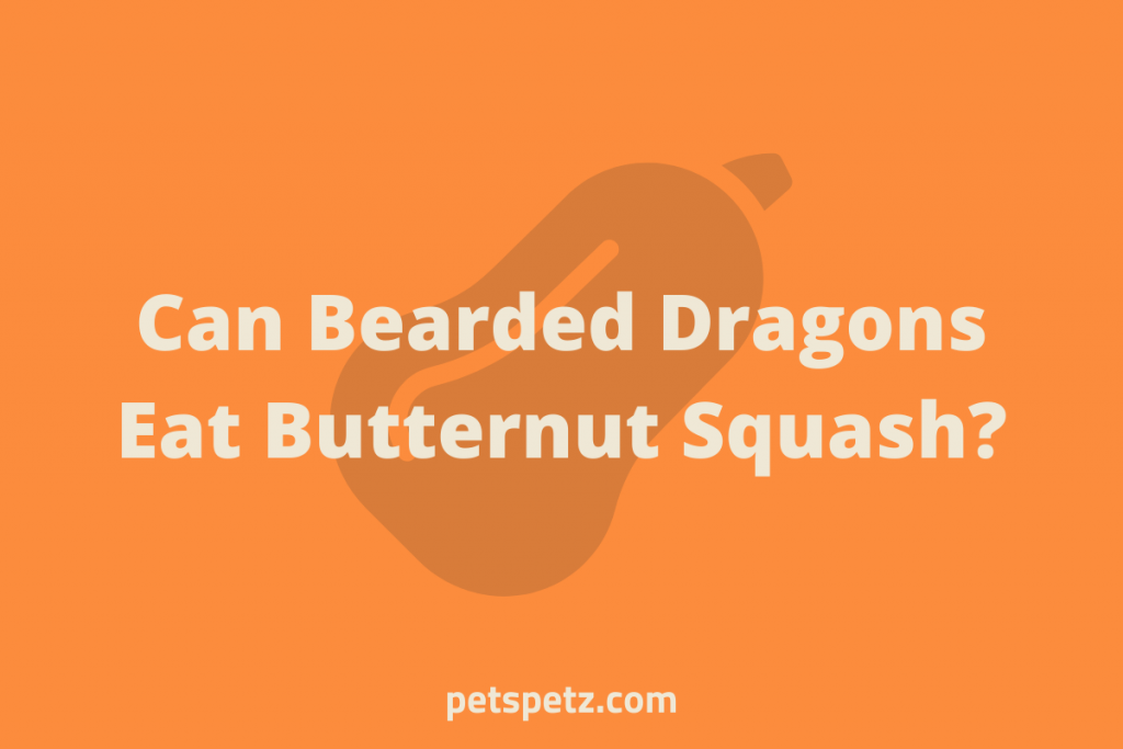 Can Bearded Dragons Eat Butternut Squash