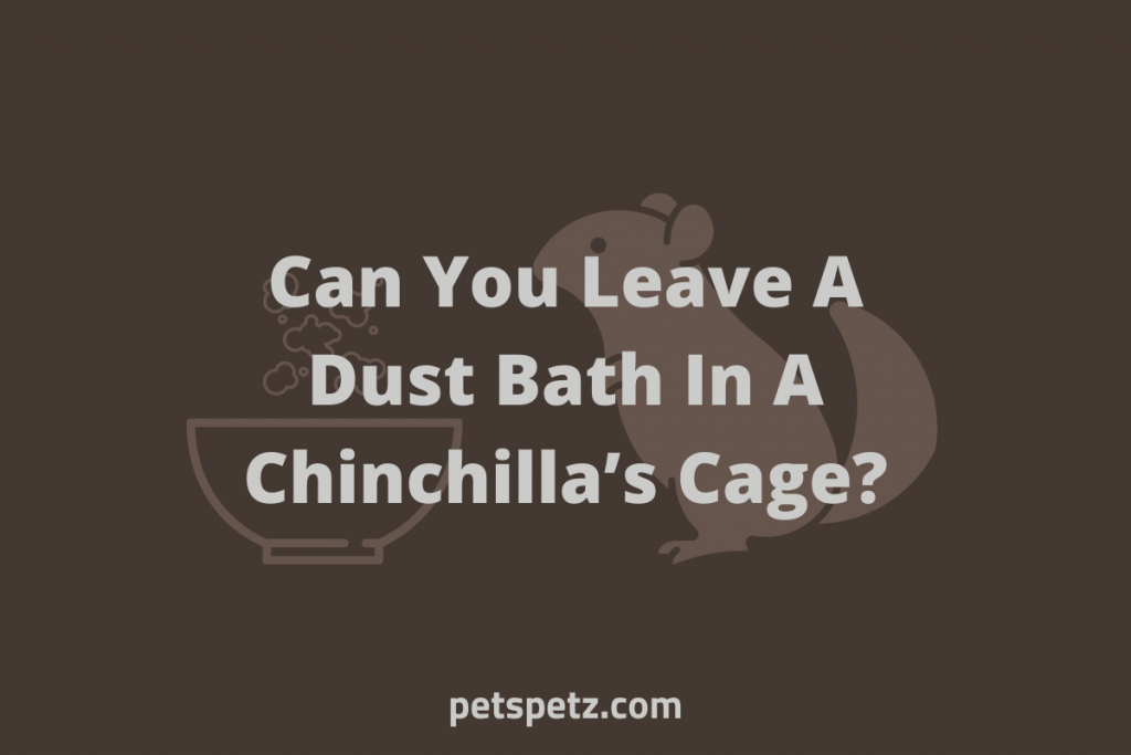 Can You Leave A Dust Bath In A Chinchilla's Cage