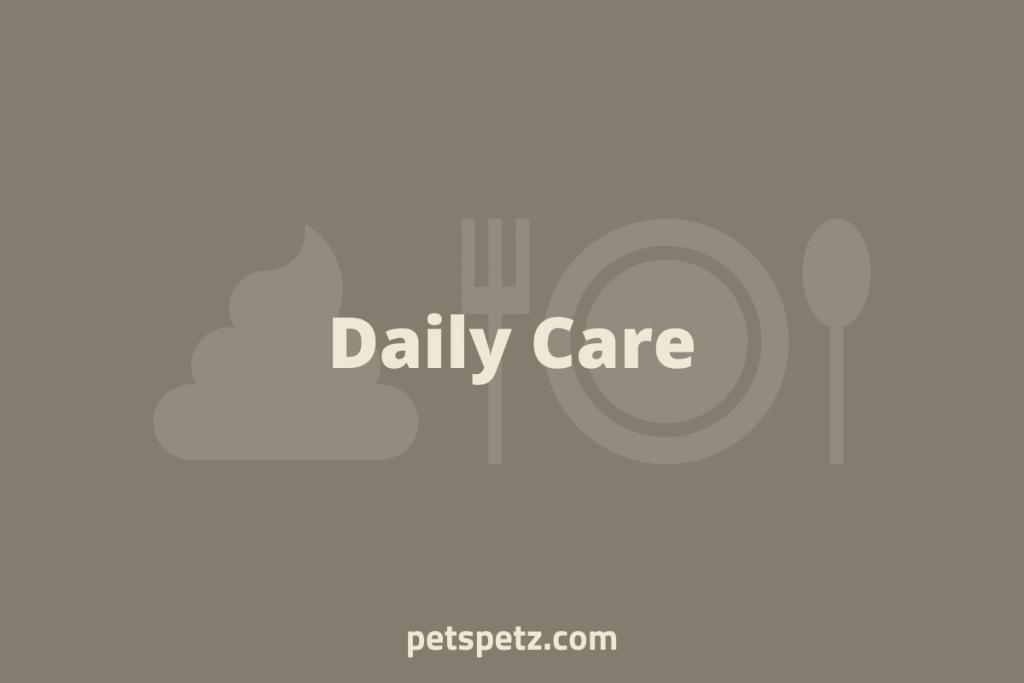 Daily Bearded Dragon Care
