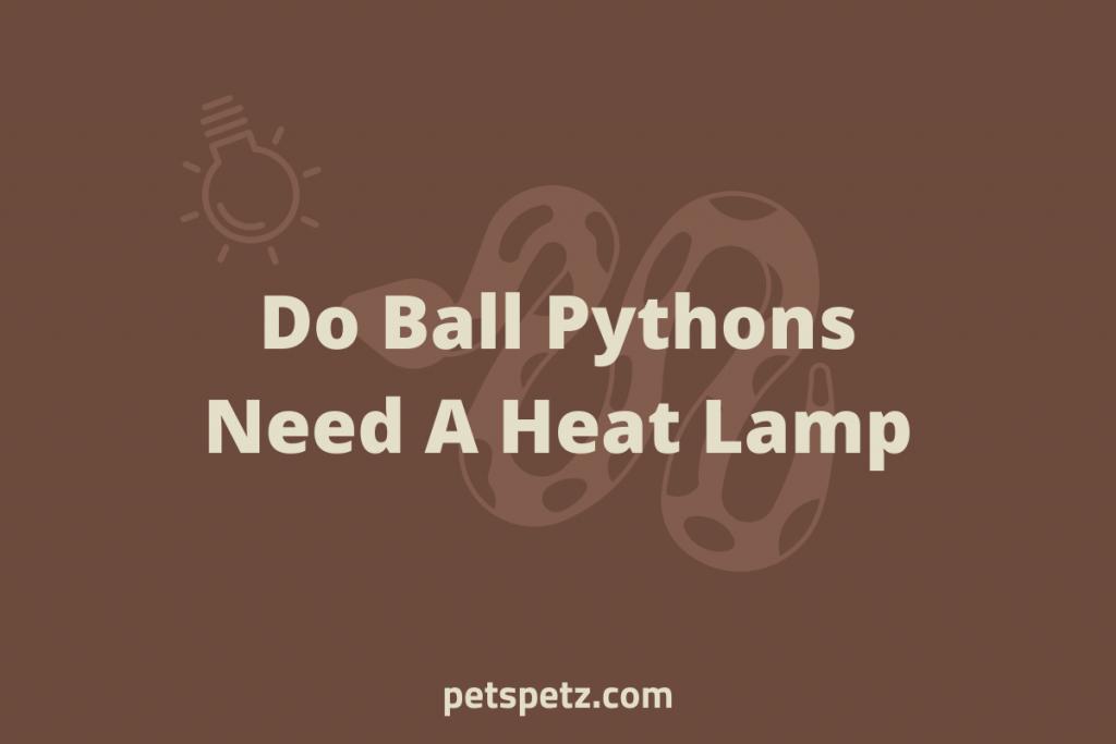 Do Ball Pythons Need A Heat Lamp