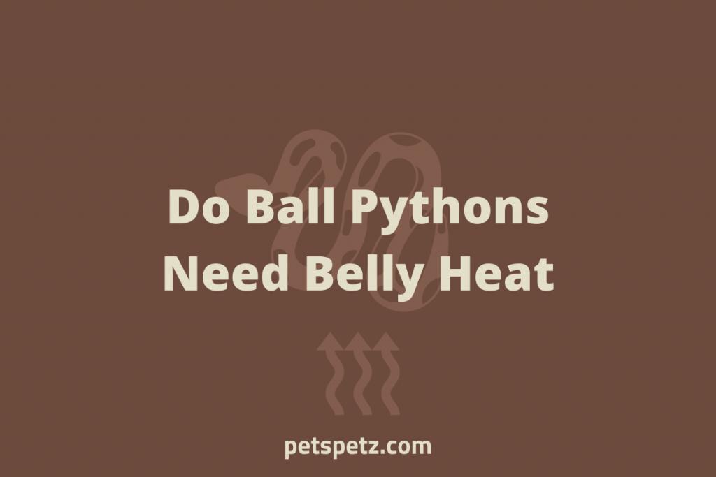 Do Ball Pythons Need Belly Heat