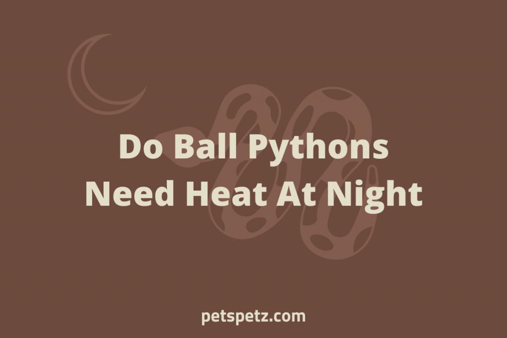 Do Ball Pythons Need Heat At Night