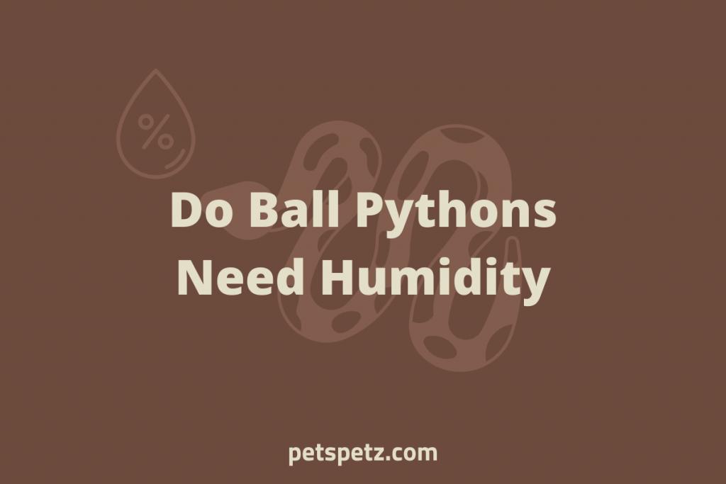 Do Ball Pythons Need Humidity